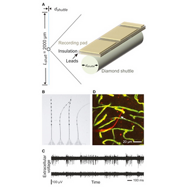 29. Can One Concurrently Record Electrical Spikes from Every Neuron in a Mammalian Brain?