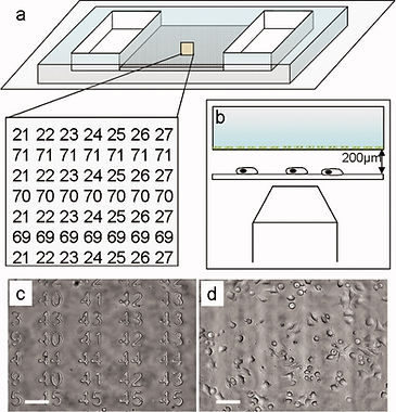 10. A microfluidic positioning chamber for long‐term live‐cell imaging