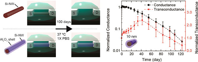 16. Long term stability of nanowire nanoelectronics in physiological environments