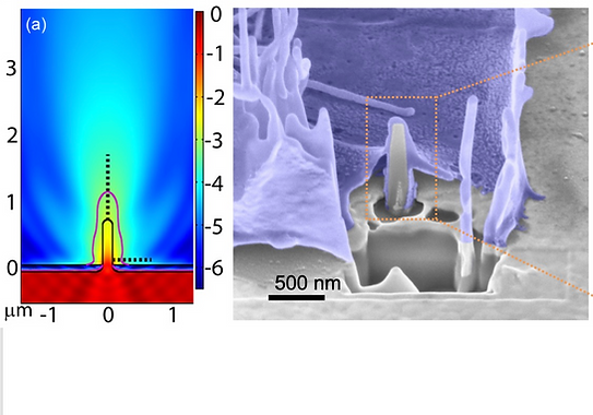09. Vertical nanopillars for highly localized fluorescence imaging