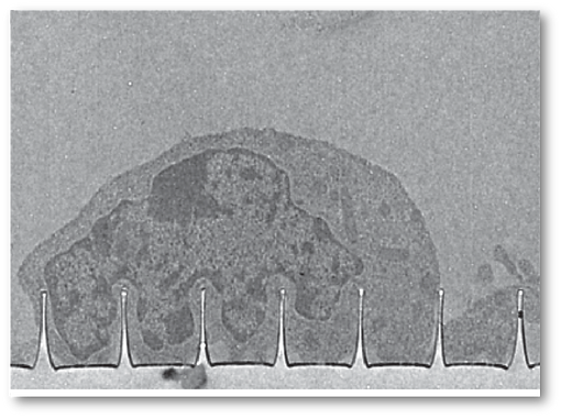 13. Characterization of the Cell-Nanopillar Interface by Transmission Electron Microscopy