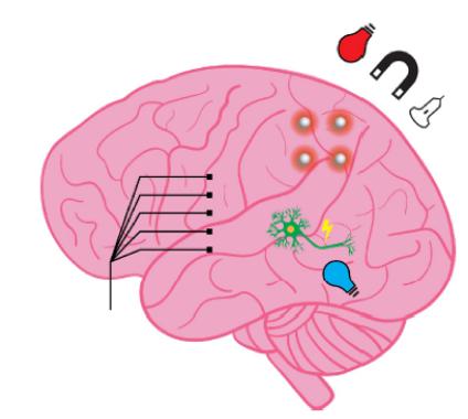 26. Nano functional neural interfaces