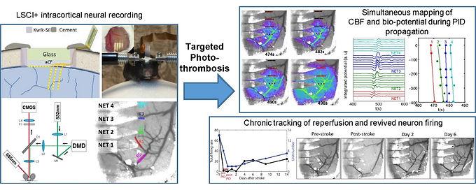 24. Nanoelectronics enabled chronic multimodal neural platform in a mouse ischemic model