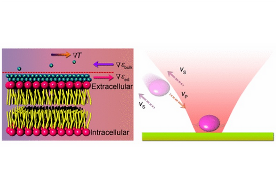 21. Thermophoretic tweezers for low-power and versatile manipulation of biological cells