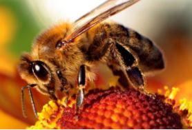Web_Million Pollinator Garden challenge
