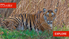 Top 5 Wildlife Destinations of South India