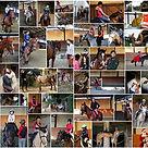 Scuola Equitazione Rho