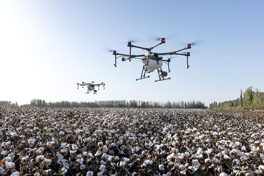 Drones atuando na plantação de algodão