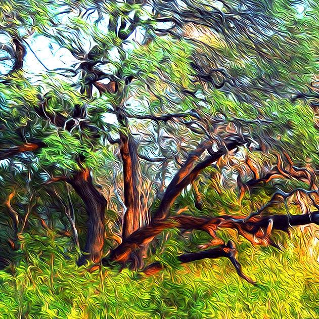 Nancy Wood Fine Art