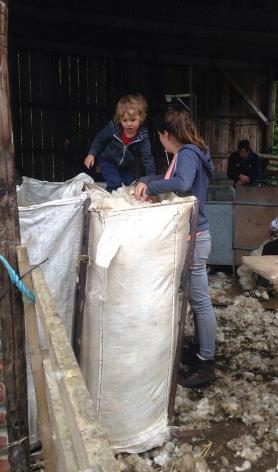 Flattening the wool