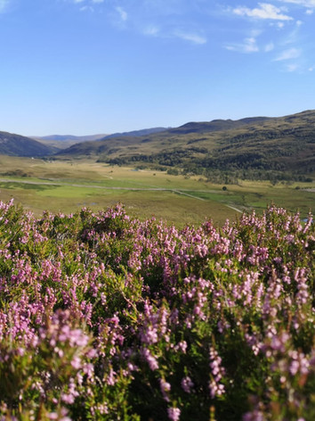Heather on the hillls