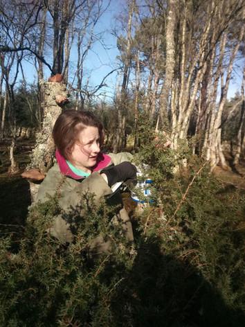 Jess foraging