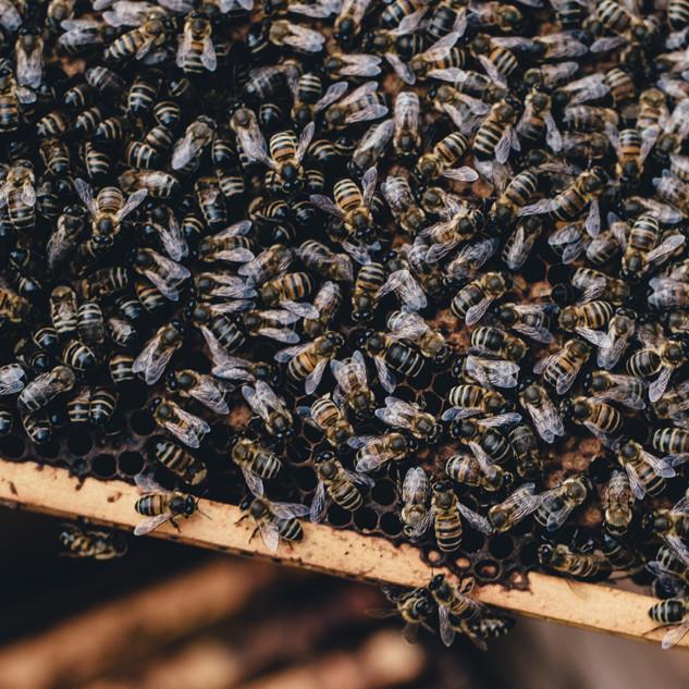 Bee%20hive_edited.jpg