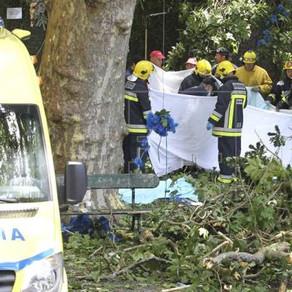 Portugal: Queda de árvore antes de procissão deixa 12 mortos