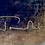 Thumbnail: ORPHEICA