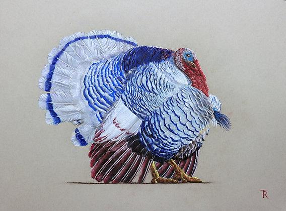 BLUE GOBBLER