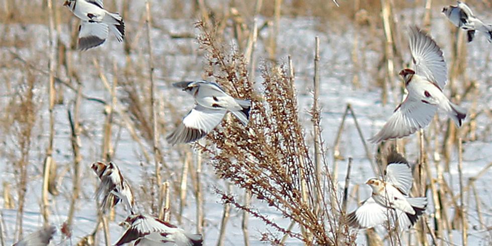 How Nature is Speaking: Bird Language Secrets Revealed