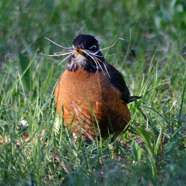 Nesting Birds Walk