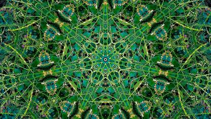 Stills art stream - thegreen 1