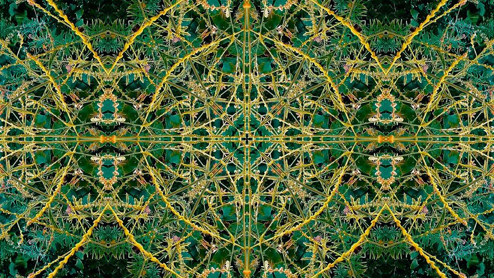 Stills art stream - thegreen 1a