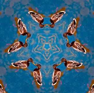 Ducks_ellaluginart