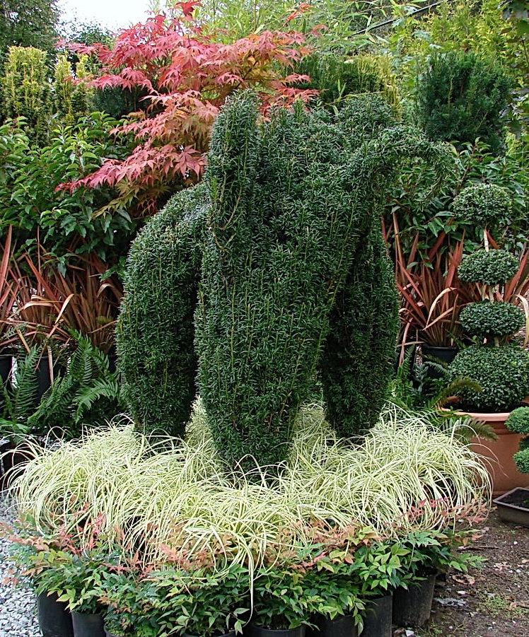 Yew Topiary Elephant