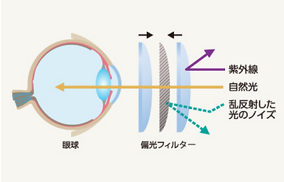 偏光レンズ構造.png