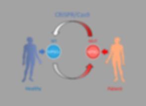 disease modeling 1.png