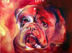 Bulldog Anglais-English Bulldog