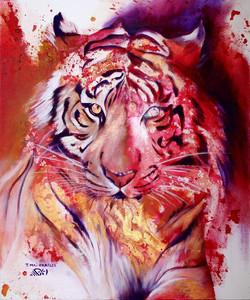 Tigre de Feu-Tiger of Fire