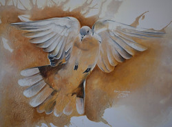Colombe - Dove
