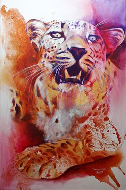 Léopard du Désert-Desert Leopard