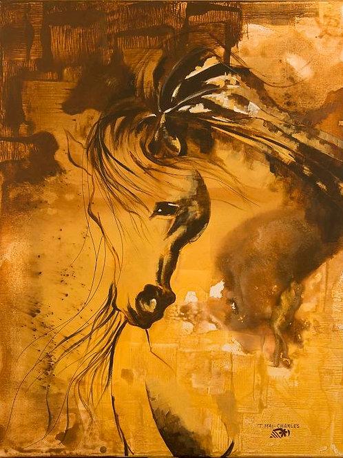 """""""Portrait bicolore de cheval arabe """""""