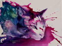 Chat de Gouttière-Tom Cat