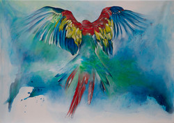 Ara - macaw