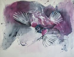 Merle - Blackbird