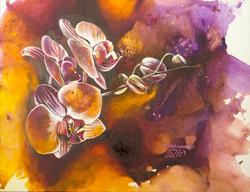 Orchidée-Orchid