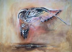 Faucon Emerillon -Merlin