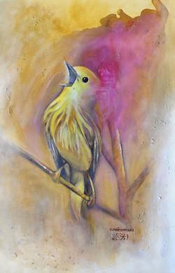 Fauvette d'Afrique - African Warbler