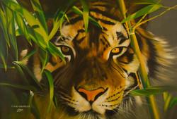 Tigre dans les feuillages