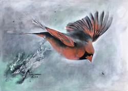 Cardinal- African Cardinal
