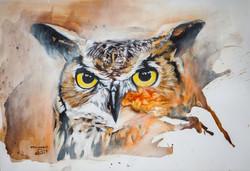 Hibou Grand Duc - eagle owl
