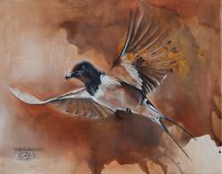 Hirondelle - Swallow
