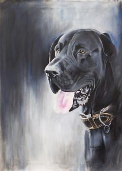 Dogue Allemand-Great Dane