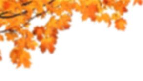 fall-1_edited.jpg