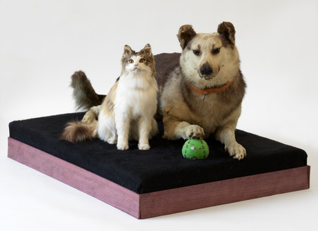 DENNIS TYFUS Beuys' Be(a)st(s), 2021 mounted cat and dog, engine, motion sensor, artist pedestal 60 x 103 x 71,5 cm