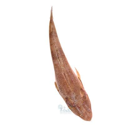 牛鰍魚 (1條 / 1pc)