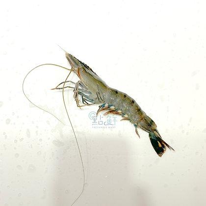 老虎蝦 (半斤/ 0.5catty)