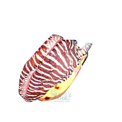 大潺螺 椰子螺(1斤/ 1catty)
