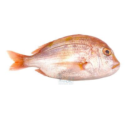 波立魚  (12-14兩 / 1pc)